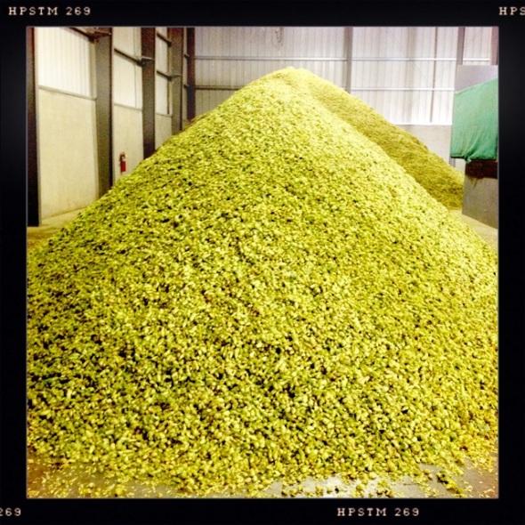 cone hops