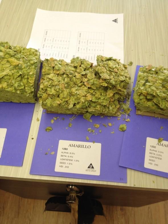 hops yakima 2
