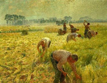 Claus_Emile-Flax_harvest.normal